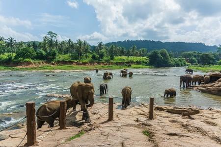 elephants in pinnawela sri lanka Stock Photo