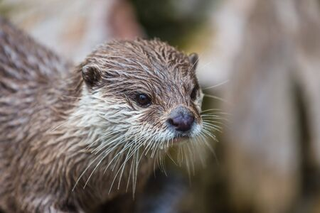 otter: portrait of an otter