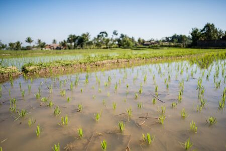 Tetebatu, Lombok - Circa July 2019 - Visiting the rice people in tetebatu