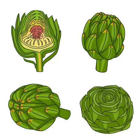 artichoke: Set of line hand drawn artichoke.