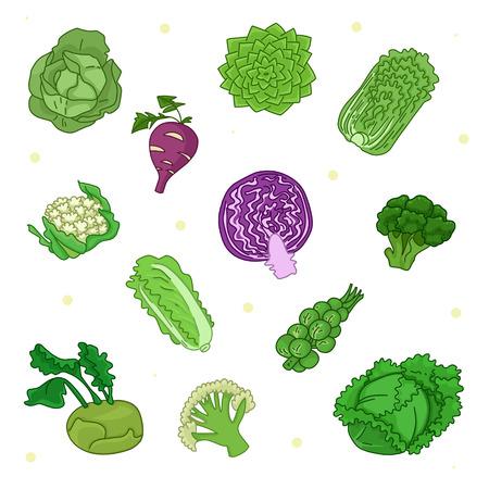 napa: Colorful set of cabbage. Illustration