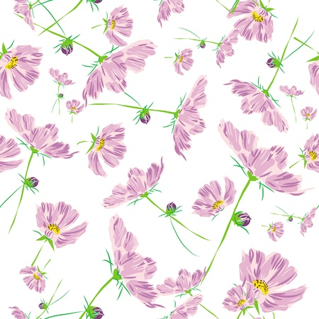 rose flower pattern cosmos isolated on white background Stock Photo - 14693347