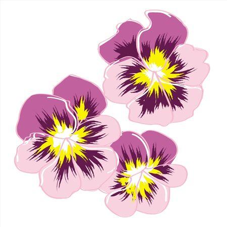 flowerses: three rose flowerses pansy Illustration