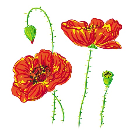 flower bed: flower poppy, anemone isolated on white background  Illustration