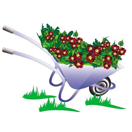 pushcart: blue wheelbarrow, pushcart garden with flower pansy