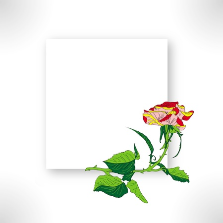 red rose isolated on white background Illustration