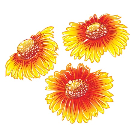 three daisy orange isolated on white background  Illustration