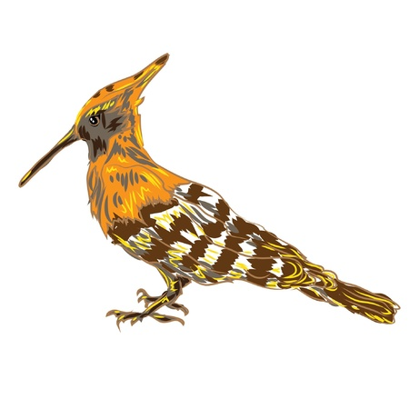 bird hoopoe Upupa epops  Vector