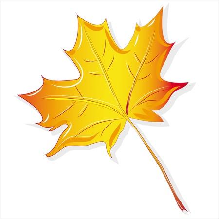 maple leaf yellow, isolated on white background raster Illustration