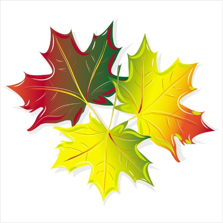pattern maple leaf, isolated on white background raster