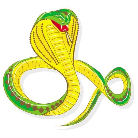 asp: snake cobra, isolated on white background