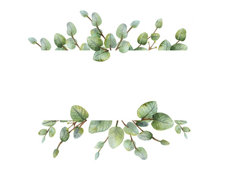 Watercolour green eucalyptus banner on white background. Spring or summer flowers for invitation, wedding or greeting cards. 스톡 콘텐츠