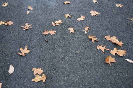 macadam: Macadam leaves