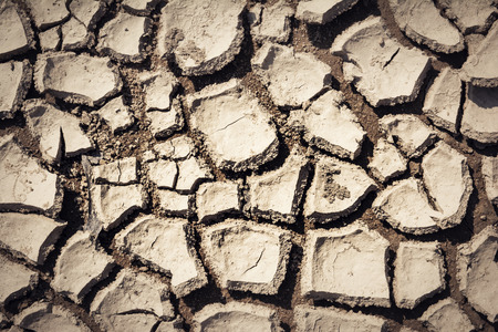 Cracked and parched earth in a lake bed