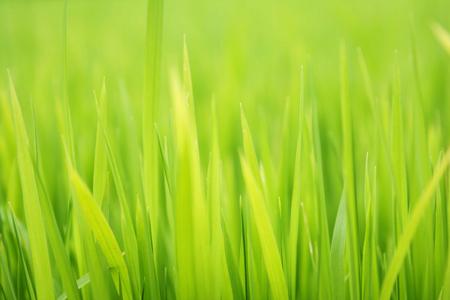 Textured green grass background