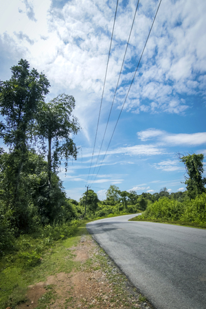 asphalt road through forest