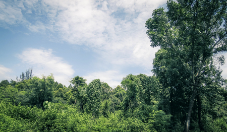 Blue sky and forest landscape