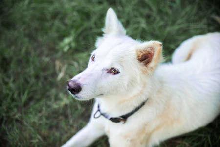 portrait of white furry dog 免版税图像 - 158464077