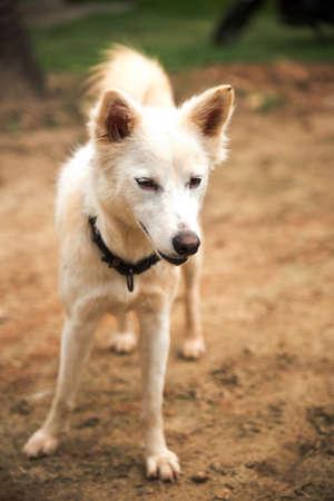 portrait of white furry dog 免版税图像 - 158464079