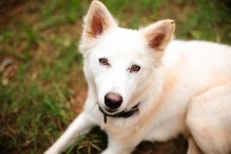 portrait of white furry dog 免版税图像