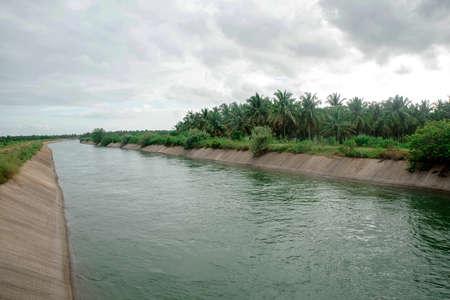 water supply channel through coconut farm 免版税图像