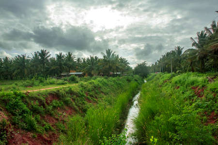 water supply channel through coconut farm 免版税图像 - 158464089