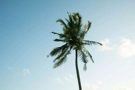 coconut tree farm in India