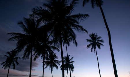 coconut tree farm in India 免版税图像 - 158488665