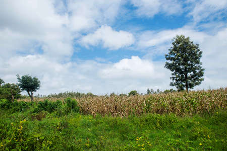 idyllic Country side Landscape - blue sky with white clouds