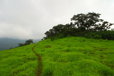 The hiking trail along the green grassy landscape of the hills of Western ghats at Kailashgad fort, Tahmini ghat, Maharashtra, India on a monsoon day.