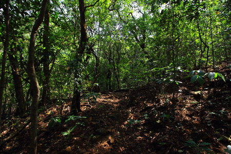 A hiking trail to Andharban through the green forests of the Western ghats of Maharashtra, India.