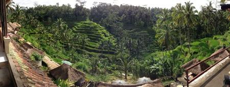 padi: Ubud rice padi terrace