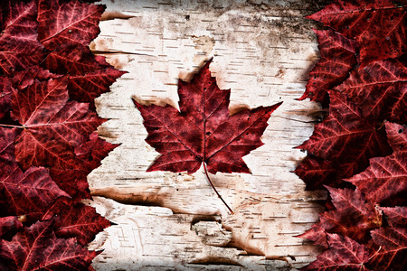 The image of the flag of Canada constructed entirely out of genuine maple leaves and white birch bark from species native to that country   photo