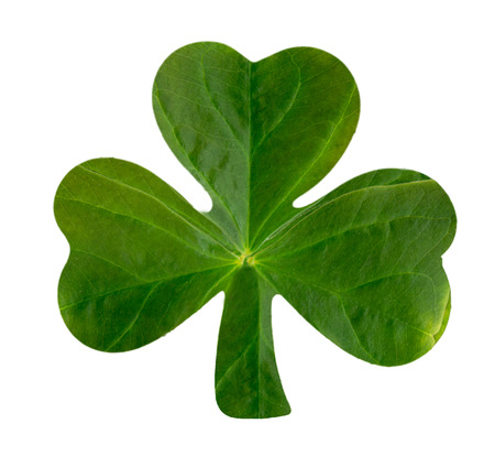 The emblematic Irish Shamrock featuring real leaf texture over white  Standard-Bild