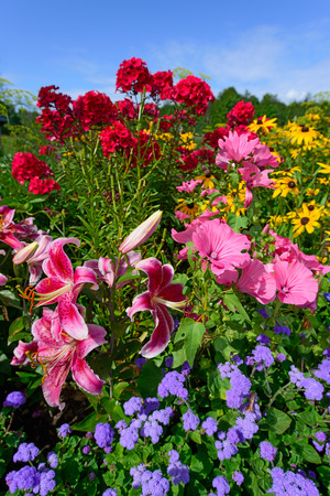 hollyhocks: Scenic flower garden filled with vibrant perennials in full bloom on a clear summer day   Vertical orientation