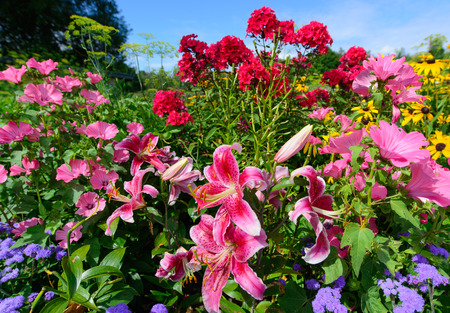 Scenic flower garden filled with vibrant perennials in full bloom on a clear summer day   Horizontal orientation  photo