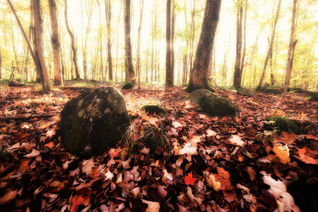Sunlight breaks through the fog in the woods on a misty Autumn morning.   Processed for an aged vintage retro look.      photo