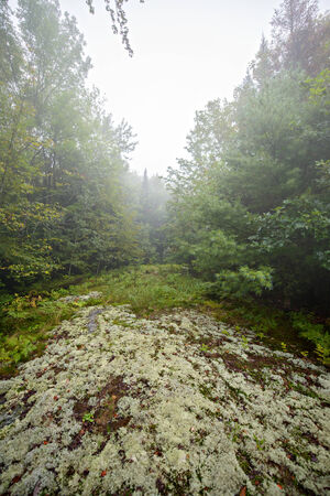 A trail of lichen and moss through a forest on a foggy day  photo