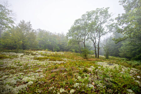 A rocky area covered in lichen and moss in a clearing of a forest on a foggy day
