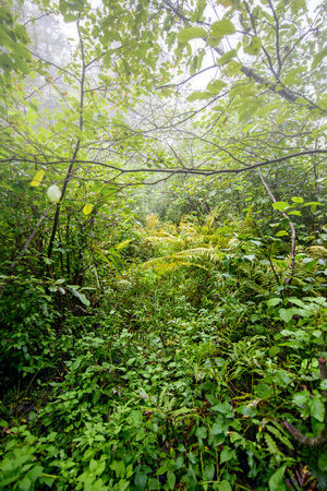 A forest floor covered in foliage on a foggy day. photo