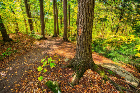 provincial forest parks: A hiking trail in a forest park during the autumn season  Stock Photo