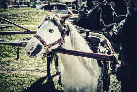 Een pony gespannen om een pony wiel wachten op een pony rijden beginnen. Verwerkt om retro te geven / langzaam verdwenen kijk. Stockfoto