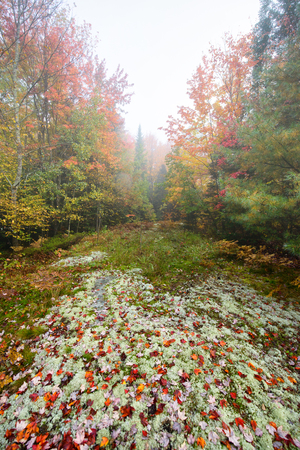 A lichen and moss covered trail in the woods during the autumn season on a foggy day.  photo