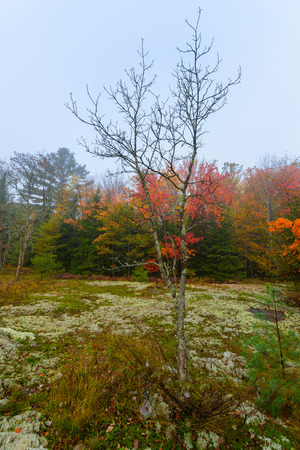 A small bare tree stands on a moss and lichen covered ground in a clearing in the woods during the autumn season on a foggy day.  photo