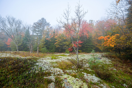 Moss and lichen cover the ground in a clearing of a forest during the autumn season on a foggy day.  photo