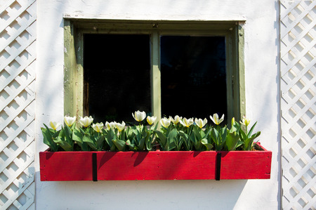 An old window of a house with a flower box of tulips.