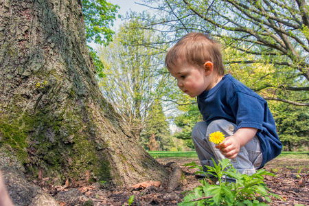A young boy crouches near a tree inspecting something on the ground while holding a dandelion flower. Reklamní fotografie