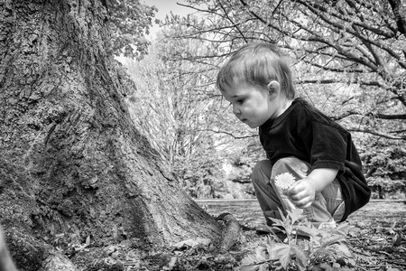crouches: A young boy crouches near a tree inspecting something on the ground while holding a dandelion flower.  Processed in black and white.