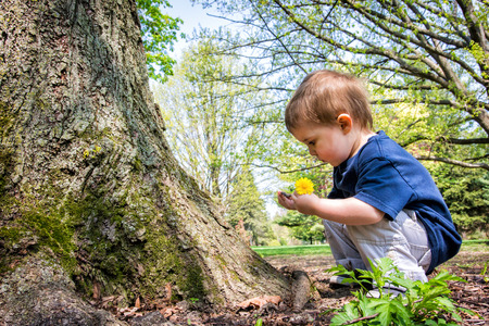 A young boy crouches near a tree looking at a twig in his hand while holding a dandelion flower in the other hand.  Reklamní fotografie