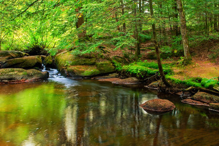 A peaceful scene of a pond with a small waterfall in a lush green forest. photo